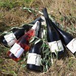 Organska vina – Vinarija Jokić
