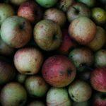 Sirće od divljih jabuka kao lek